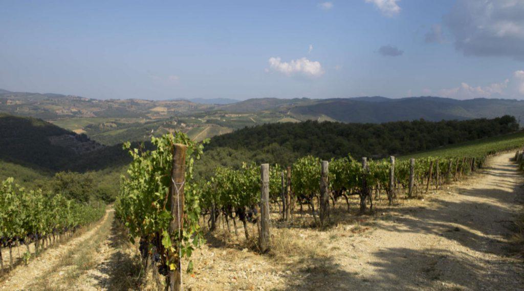 Vigneto nel Chianti Classico di Istine, , luogo da dove viene un vino per il pacco degustazione vini primavera 2019 die Wein-Plus
