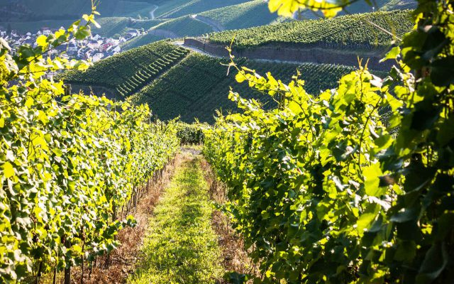 """Focus Italia 2018 – I """"Best of"""" italiani di Wein-Plus"""