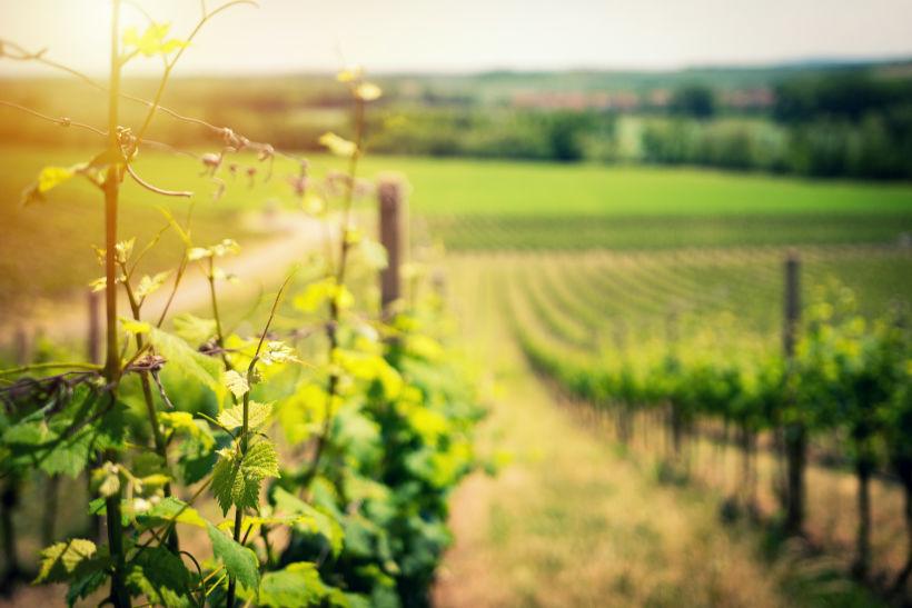 raccontiamo le zone di produzioni e i suoi produttori eccellenti in wein.plus con la sua grandissima wine expertise